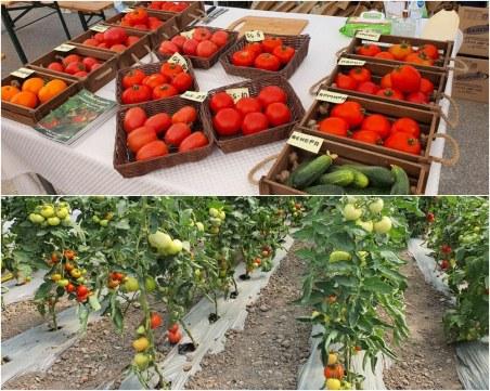 Чудно вкусни български домати и най-нови сортове показаха в Аграрния университет