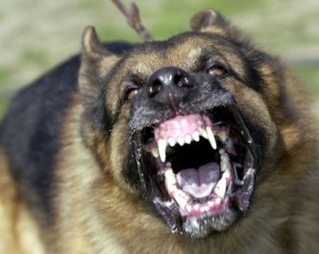 Агресивни кучета нахапаха брутално мъж, в болница е