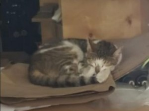 Happy end за котето - затворник, заключено 5 дни в бизнесцентър без храна и вода