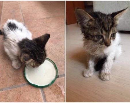 Двумесечно коте, намерено в безпомощно състояние в Пловдив, търси любящ дом