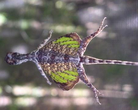 Гущери, жаби и катерици летят в Природонаучния музей в Пловдив