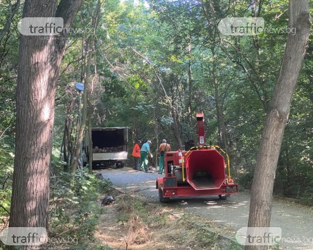 Премахват падналото дърво в Лаута, отварят алеята