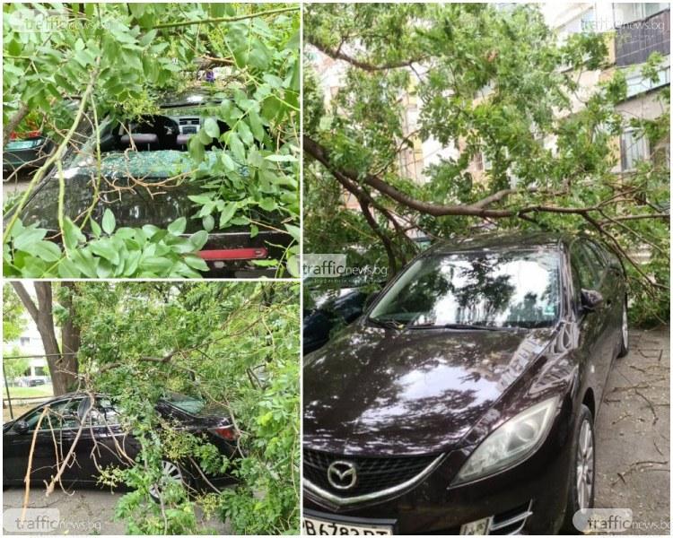 Клон се стовари върху кола в центъра на Пловдив