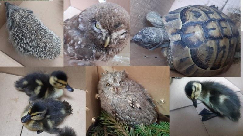 Защитени животни спасиха служители на Екоинспекцията в Пловдив