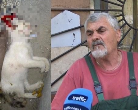 Ексхумират трупа на убитото коте, прокуратурата повдигна обвинение на гумаджията
