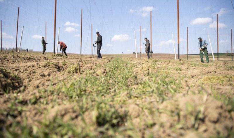 Няма заразени българи във фермата в Бавария