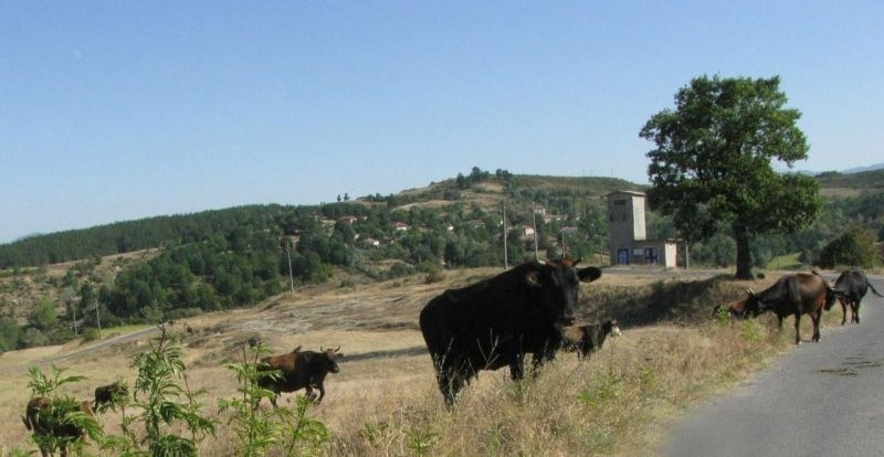 БАБХ потвърди наличие на нитратни, нитритни и амониеви йони в пробите на 28-те крави