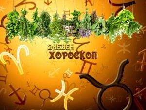 Дневен билков хороскоп за 2 август