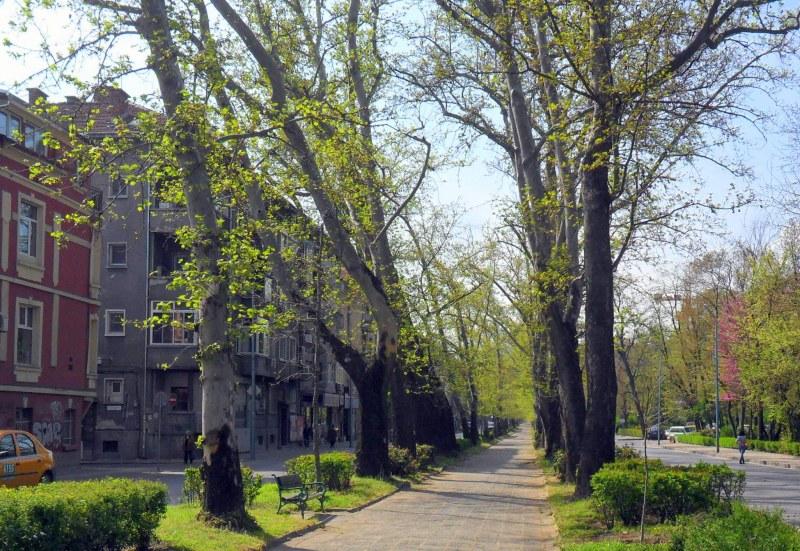 Затруднено движение в центъра на Пловдив заради премахване на клони