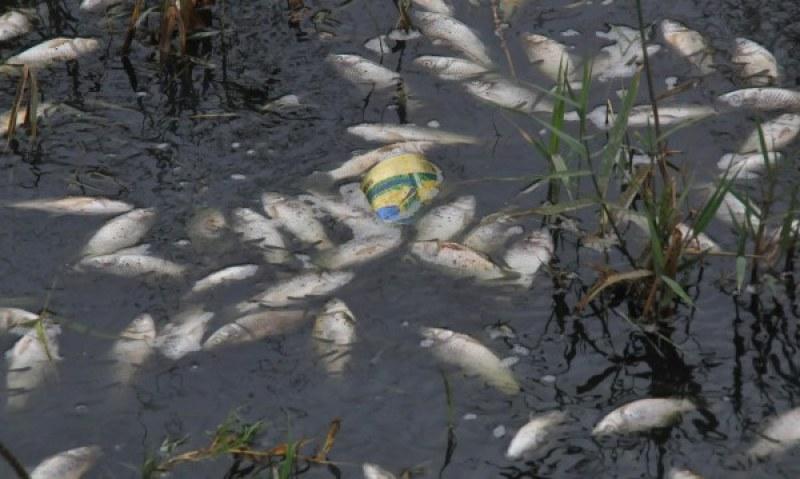 Мъртва риба изплува в реката край Брацигово! Екоинспектори взимат проби