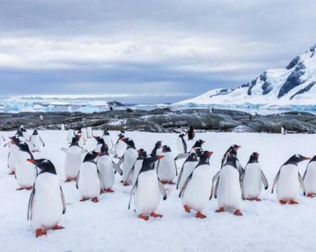 Колония от редки пингвини откриха в Антарктида