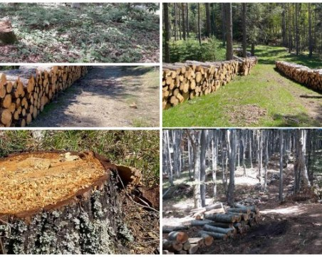 Планинари сигнализират: Поголовна сеч край Студенец и Братан