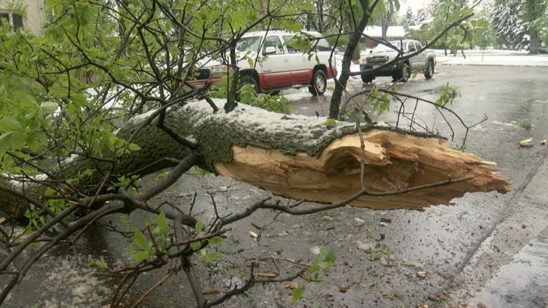 Последствията от бурята в Пловдив: 19 сигнала за паднали дървета и клони, блокирани пътища