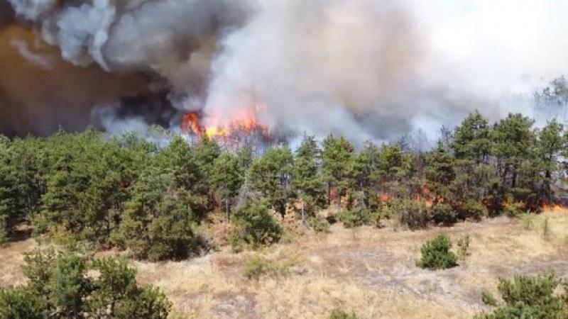 Потушиха пожарът до границата с Турция