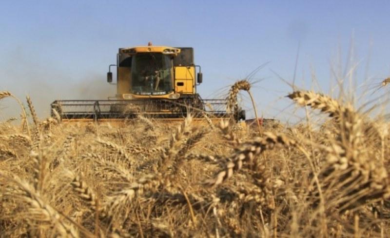 Тежка година за зърнопроизводителите! Реколтата не е било толкова лоша от 20 години
