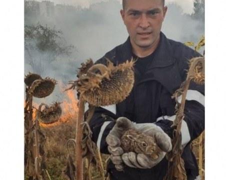 Пожарникар спаси зайче от огнена стихия