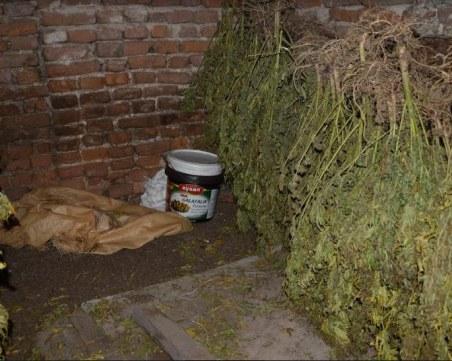 Обособена сушилня и 21 кг марихуана откриха при спец акция край Пазарджик