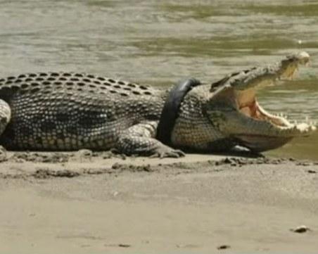 Крокодил се появи в река в Германия