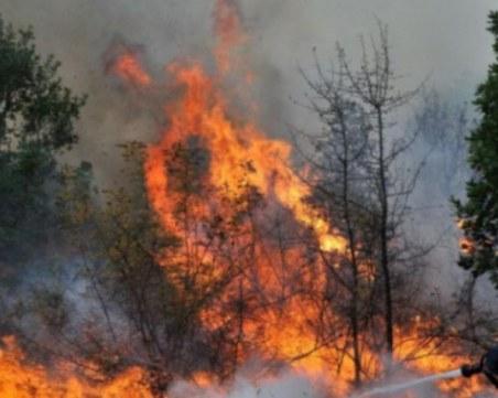 Детска игра причинила големия пожар, унищожил хиляди декари гора край Девин