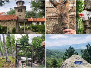 На час от Пловдив: Манастирът с 500-годишна лоза, зоокът и