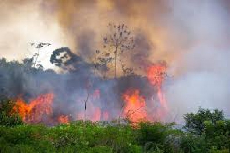 Голям пожар край Пазарджик, огнеборци се борят с пламъците