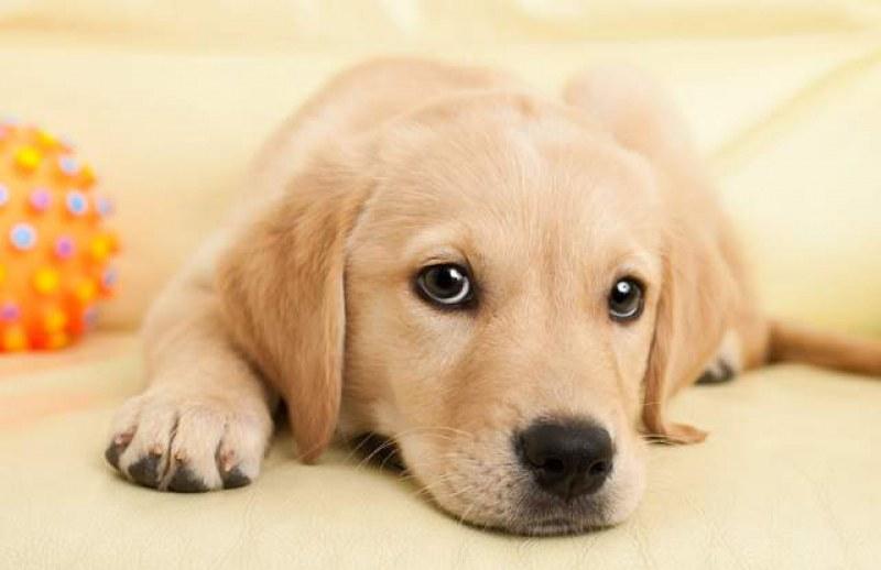 Защо носовете на кучетата са мокри и студени?
