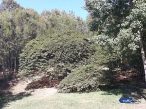 Единствен на Балканите габър расте на час път от Пловдив