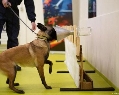 Кучета надушват Covid-19 на летището в Хелзинки