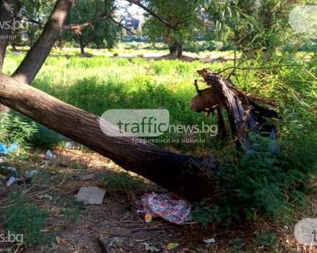 Боклуци заринаха коритото на Марица, стара пералня - сред