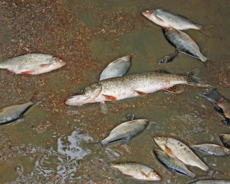 Изследват реките Разметаница и Джерман заради измряла риба