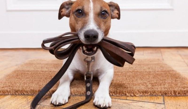 Над 2000 стопани на кучета дължат пари на общината в Пловдив