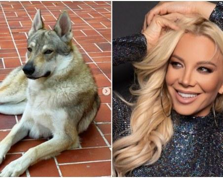 Емилия си взе вълк за домашен любимец