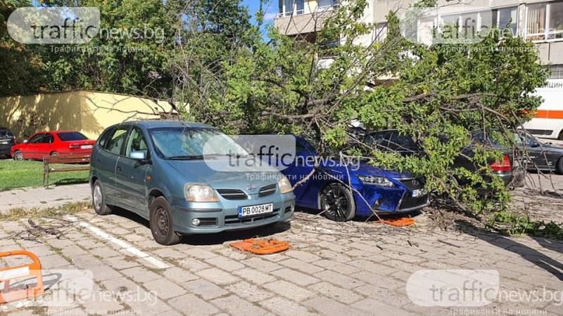 Дърво падна в центъра на Пловдив, потроши няколко коли