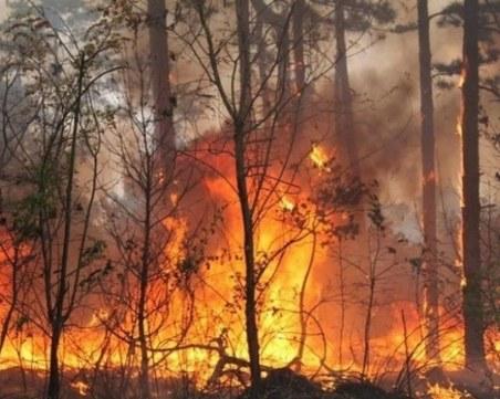 4-ма убити, 10 в болница след горски пожари в източна Украйна