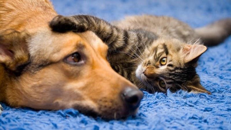 На този ден: Светът отбелязва Деня за защита на животните, българските програмисти празнуват