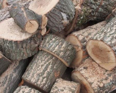 Спецакция край Пазарджик! Намериха незаконна дървесина