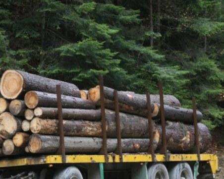 Баща и син от Дорково впрегнаха две каруци с незаконно добити дърва