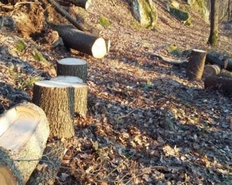 Акция срещу незаконна сеч в Пазарджишко! Спипани са нарушители