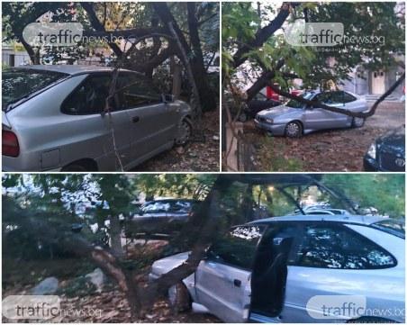 Изгнило дърво се разцепи в центъра на Пловдив, стовари се върху кола