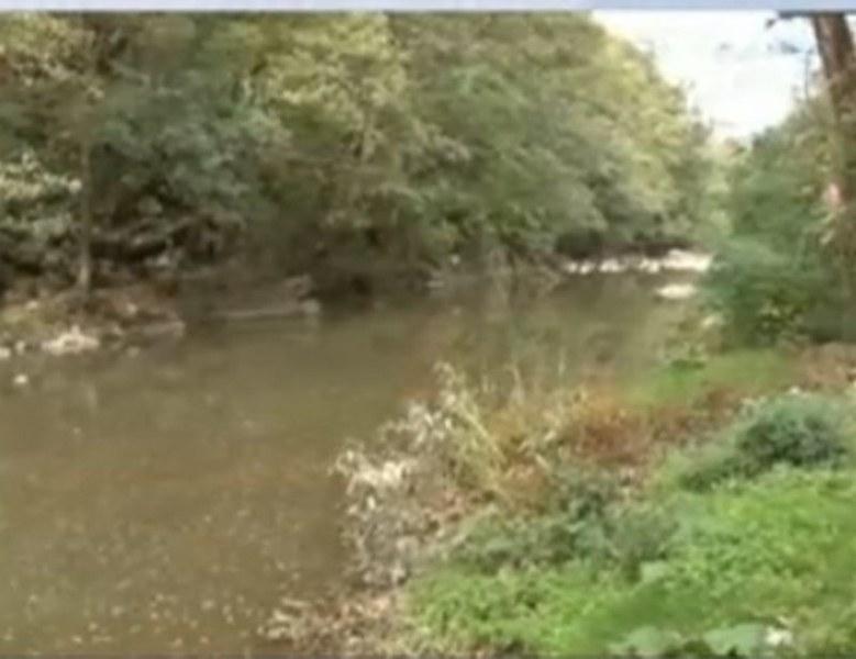 Тонове мъртва риба по бреговете на реката в Златарица