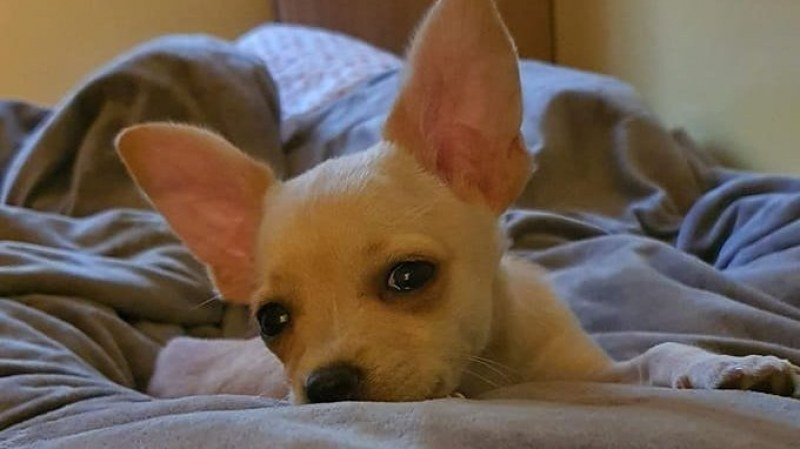 Ветеринарният съюз започва вътрешно разследване по случая с малкото куче Рая