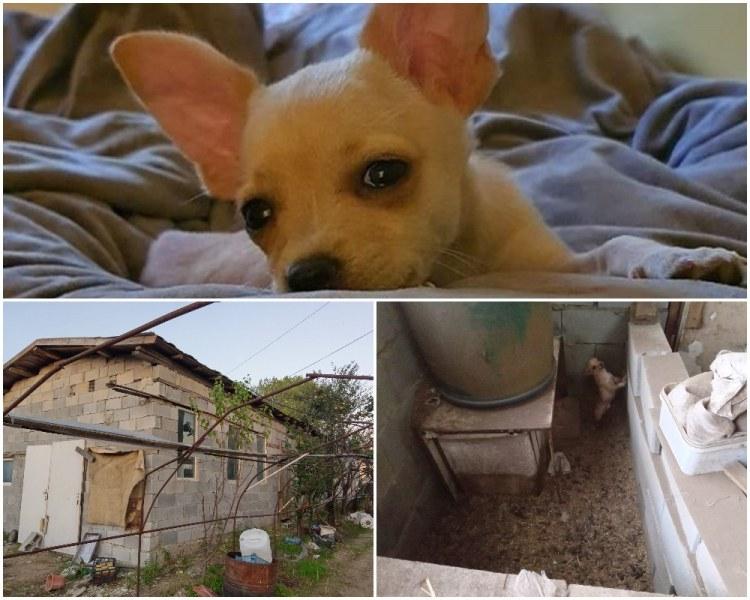 Кучето Рая родено в ужасни условия, БАБХ удари развъдника му