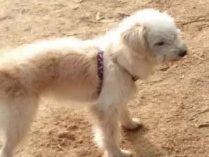 Сърцераздирателно: Куче измина 60 км, за да се върне при стопаните си