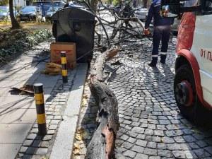 На косъм от инцидент: Дърво се стовари до пловдивчанин