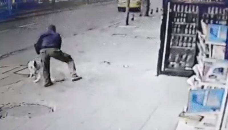 Наръгаха куче в София