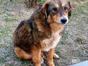 Граждани и организации ще могат да се грижат за бездомни кучета официално