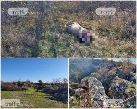 Зловещо: Пловдивчанин намери гробище за добитък – разчленено прасе и телета сеят зарази