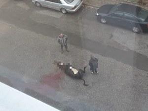 Мъж закла крава в средата на улица пред жилищен блок
