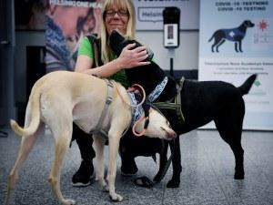 Обучени кучета стават по-успешни детектори на Covid-19 от разпространените методи