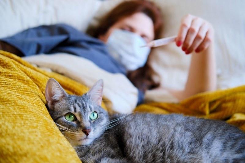 Първи случай на котка, заразена с коронавирус, е открита в Швейцария